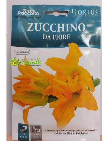 Zucchino da fiore