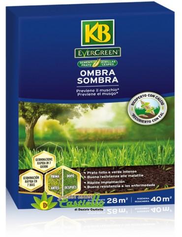 KB OMBRA