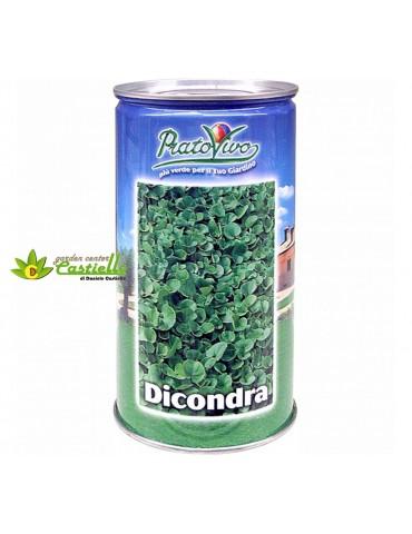 Prato Hortus -  Dichondra...