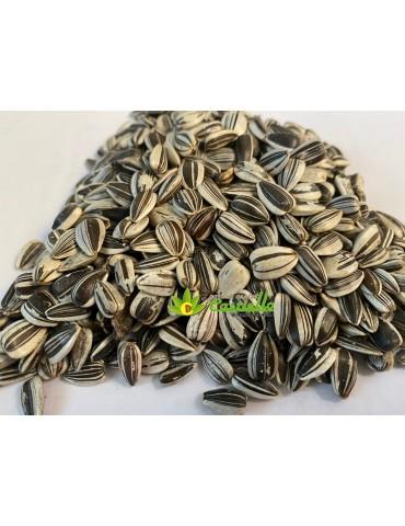 Girasoli semi per uso...